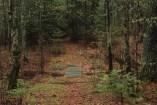 Urenholdt Forest path