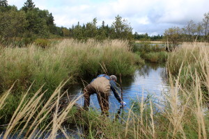 Researcher Nathan Evans takes a water sample from the creek below a beaver dam.