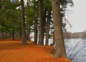 Riverside Trail, William O'Brien State Park