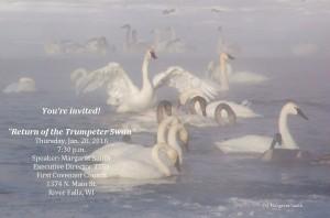 trumpeter-swans-presentation-margaret-smith