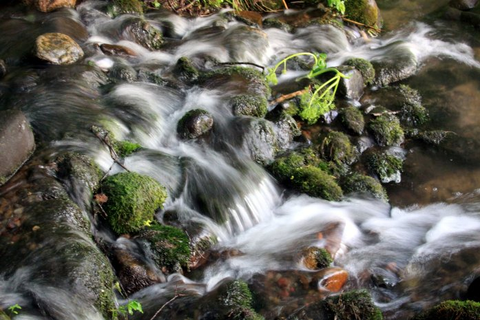 Spring water (Photo by Gary Noren)