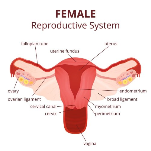 small resolution of several females complain about ovary pain during different phases of their life this condition can arise due to several causes like tumors etc