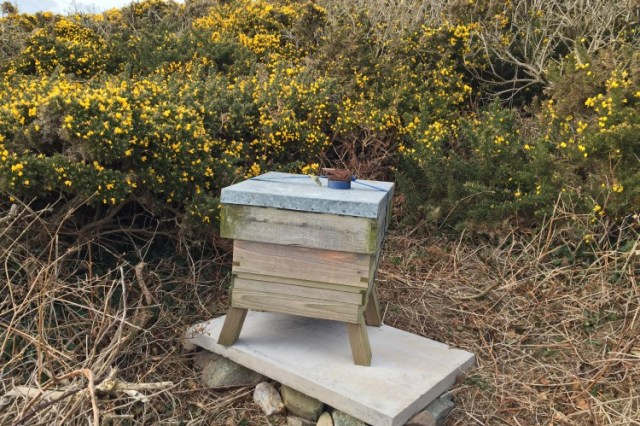 A bee hive at Porthlysgi