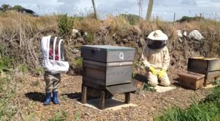 Treleddyn hives