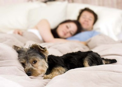 Buying A Pet Friendly Home