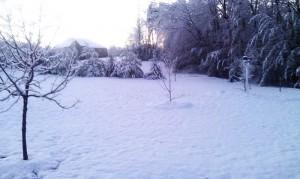 back yard 2