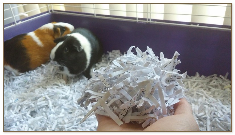 Cheap Guinea Pig Bedding