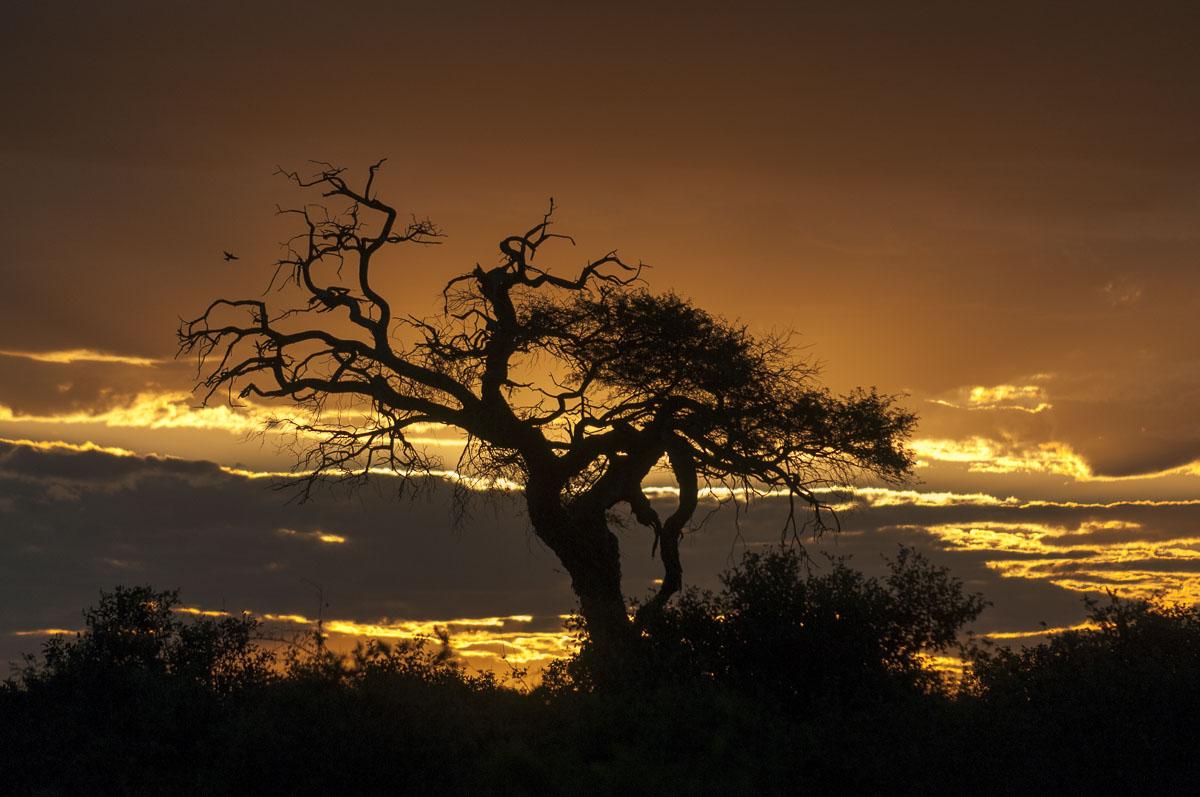 levi-botswana-5005