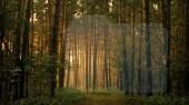 """Boschi e foreste """"italiche"""""""
