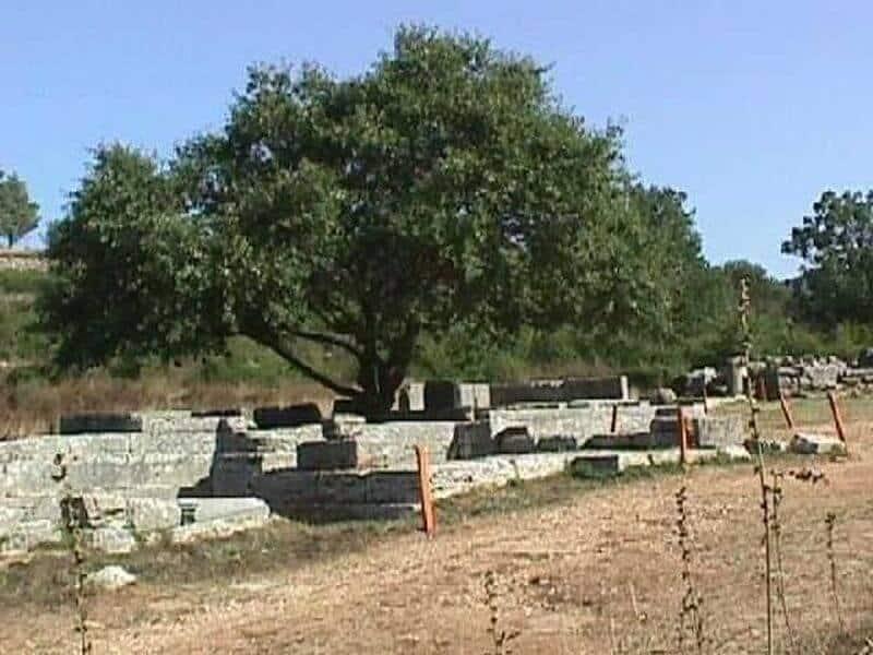 stejarul in mitologie