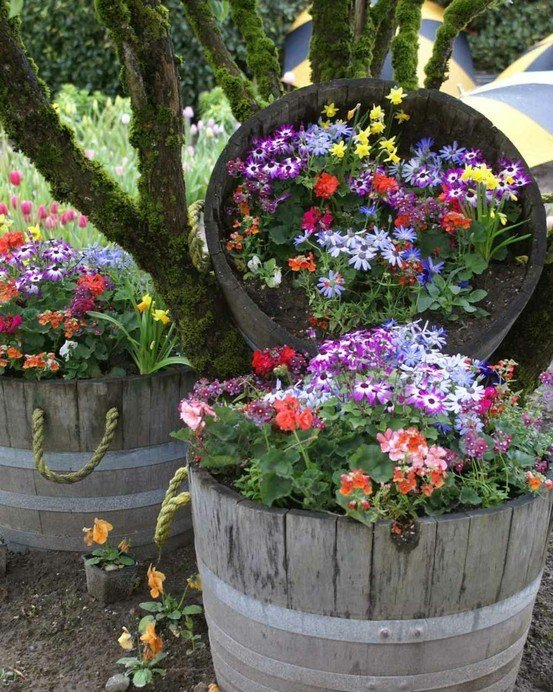 Jardiniere din butoaie - aranjamente de gradina