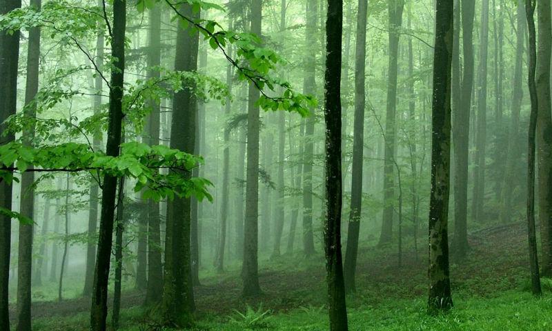 cel mai scump lemn din lume