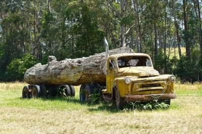lemn si produse din lemn - Acte normative