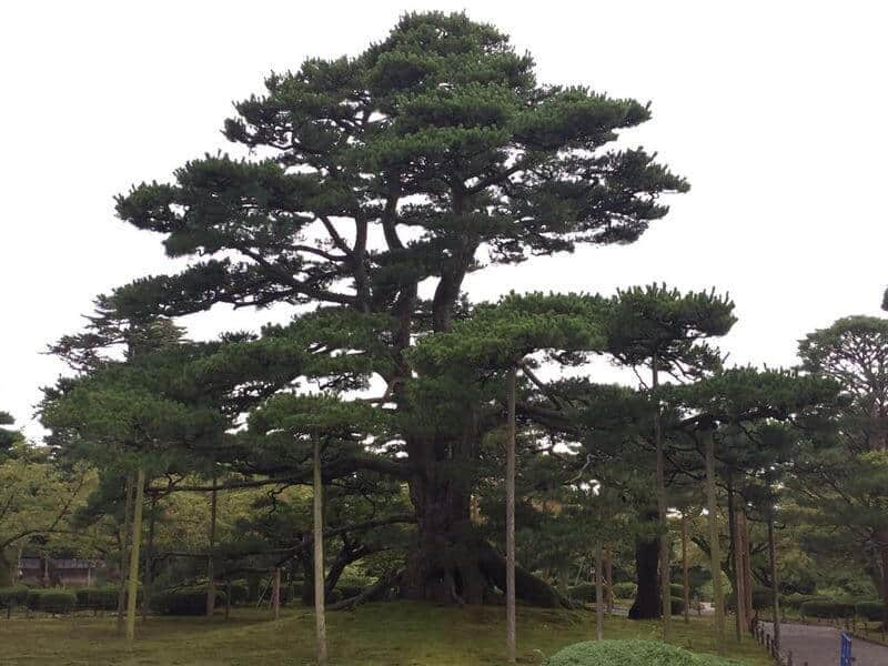 Sistem de sustinere pomi