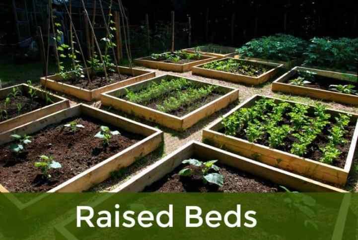 gradina cu paturi ridicate - straturi înalțate