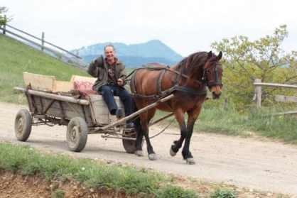 Caruta cu cal