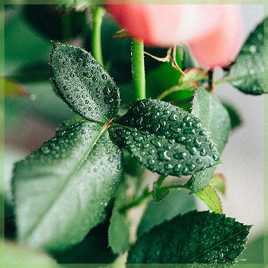potrozen binnen roze kleuren