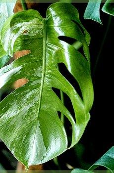 Stekjes en plantjes online kopen