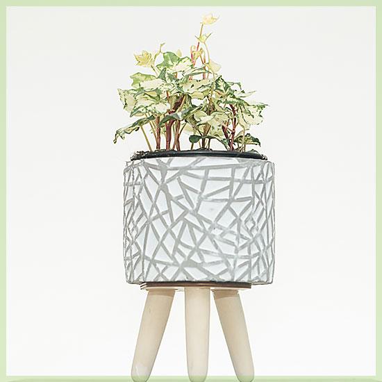 hedera golden flame variegata