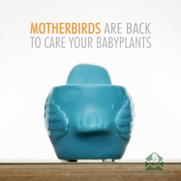 Motherbird blauw bloempot plantenpot sierpot 6 cm