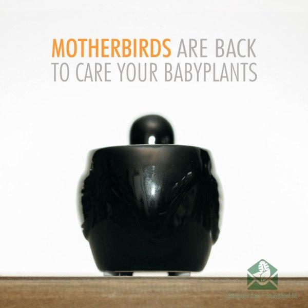 Motherbird zwart bloempot plantenpot sierpot 6 cm