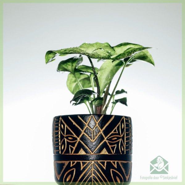 Anubis plantenpot bloempot sierpot 6 cm kopen