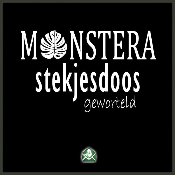 Monstera stekjesdoos geworteld stekjes pakketdeal kopen