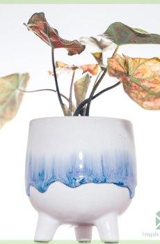 Felicia plantenpot bloempot sierpot 6 cm kopen