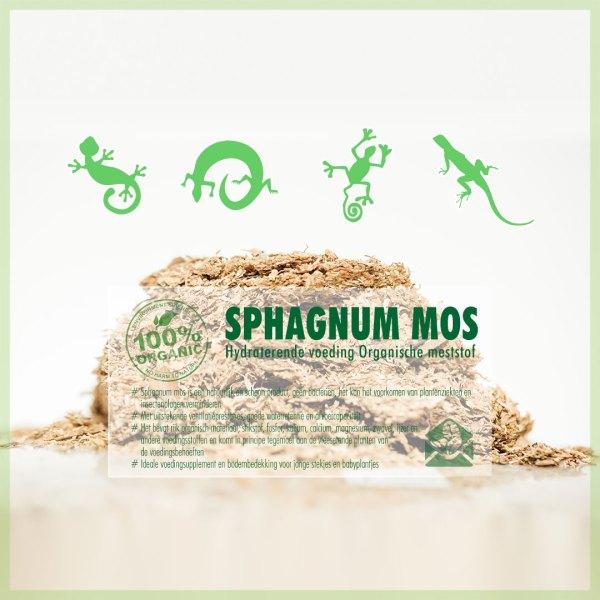 Sphagnum spagnum mos voor terrariums reptielen amfibieen kopen