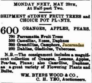 Advertisement for plant sale, including Jacarandas, 1894