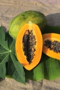 frische Papaya