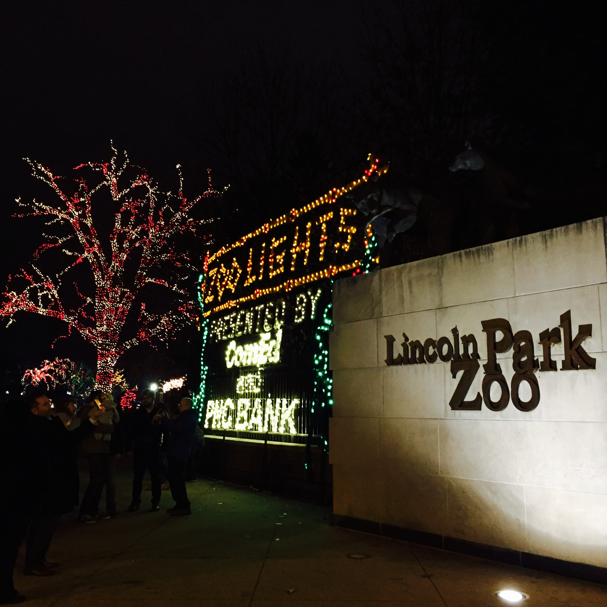 Zoo Lights At Lincoln Park Zoo Stella S Out