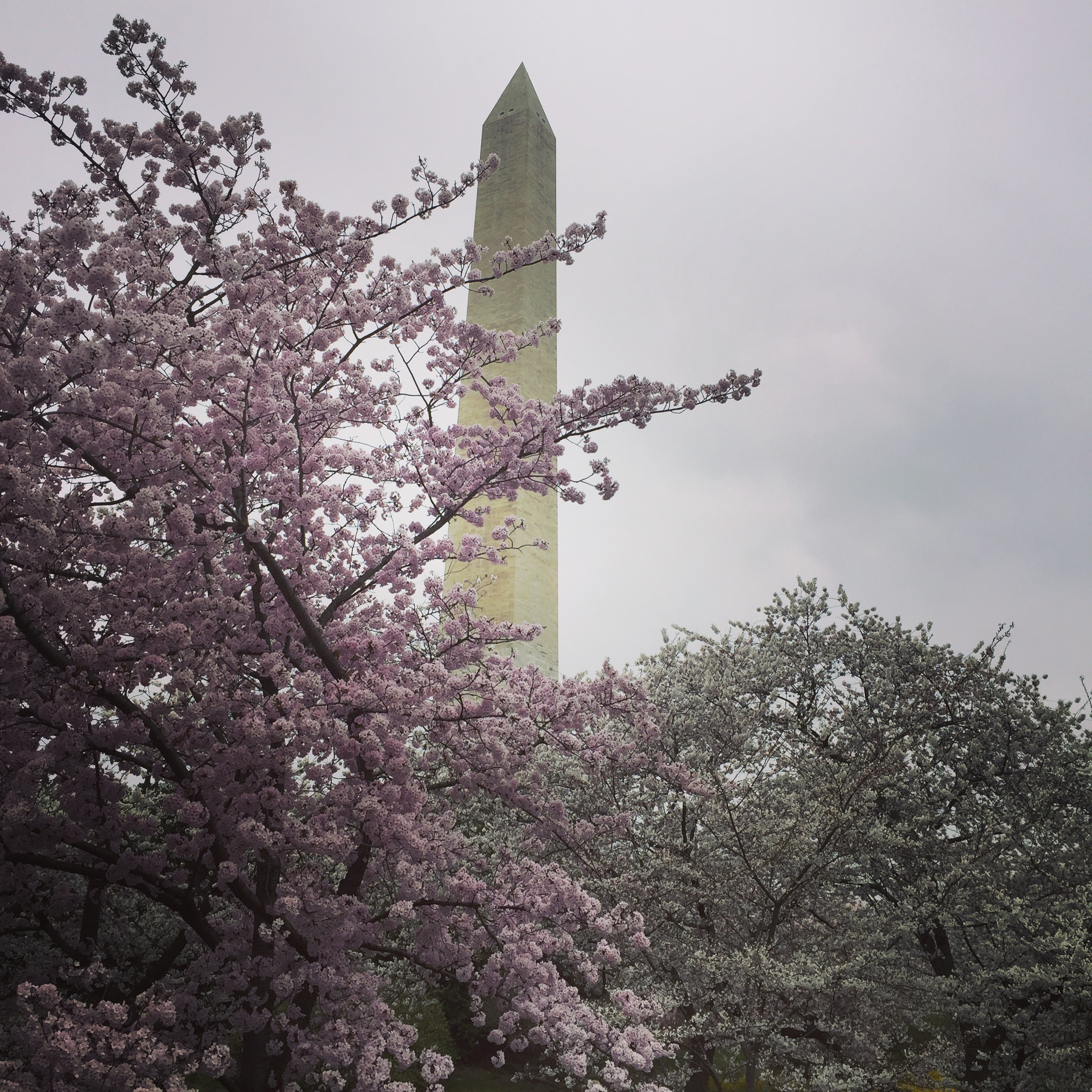 10 Things to Do in Washington, D.C. | Stella's Out...