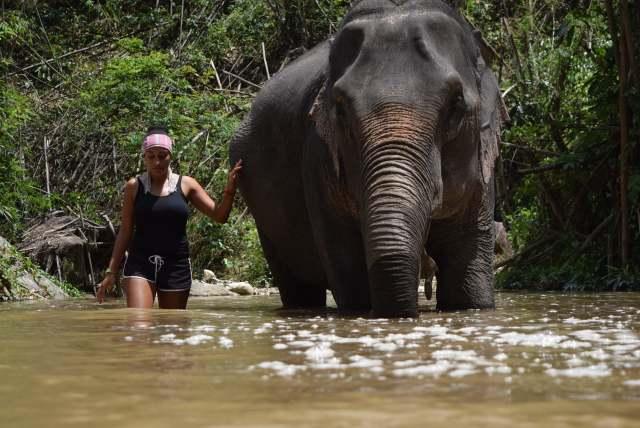 Elephants at Home