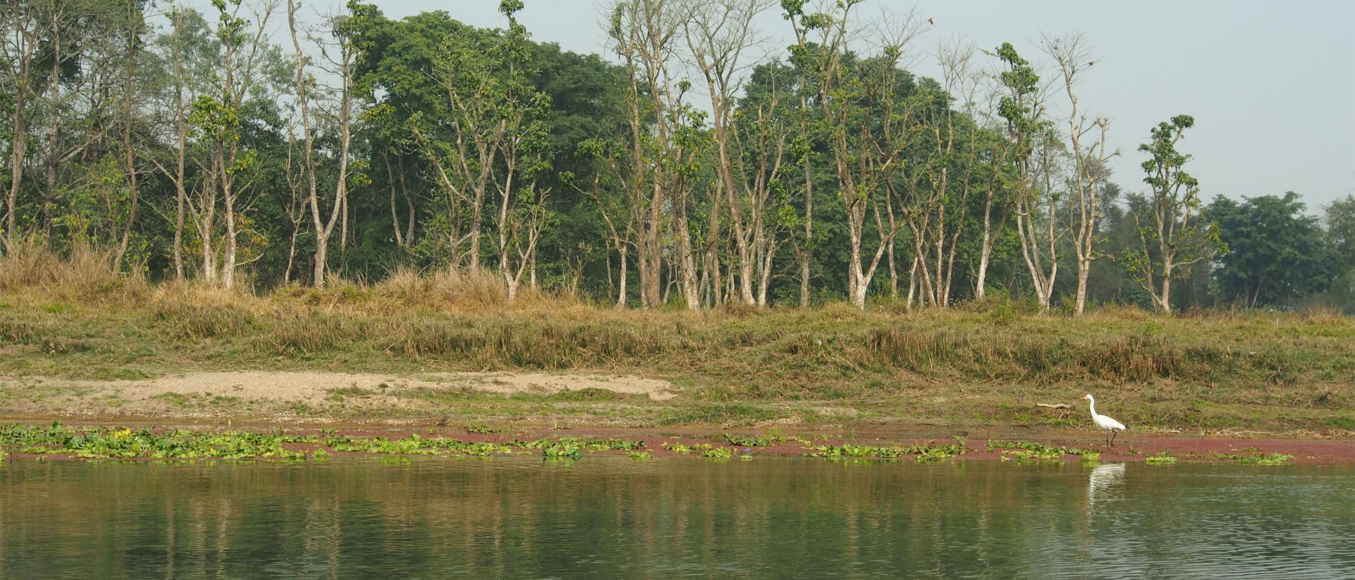 Chitwan NP, Jungle Book In Het Echt