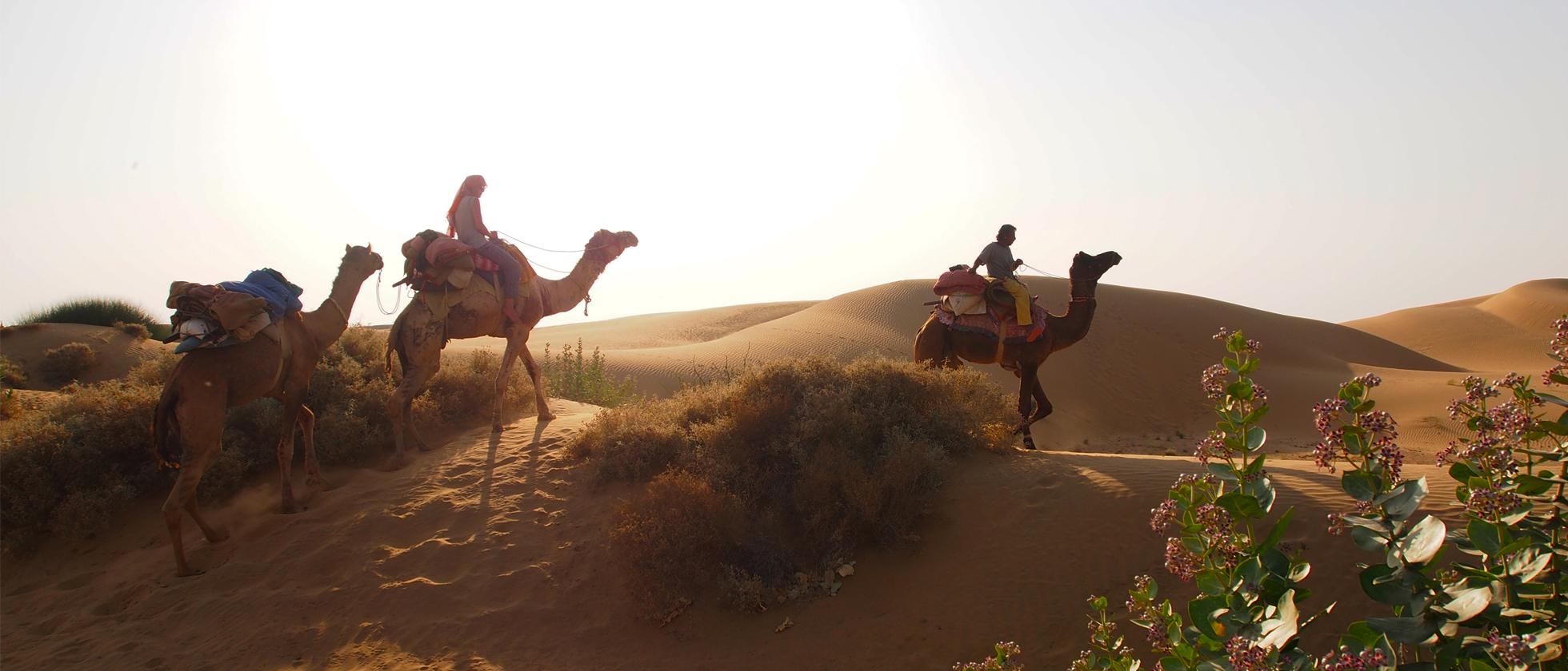 Fotoreportage Kamelen-safari: Hobbelend Door De Woestijn