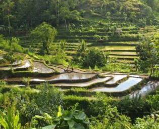 Bezoek In Bali