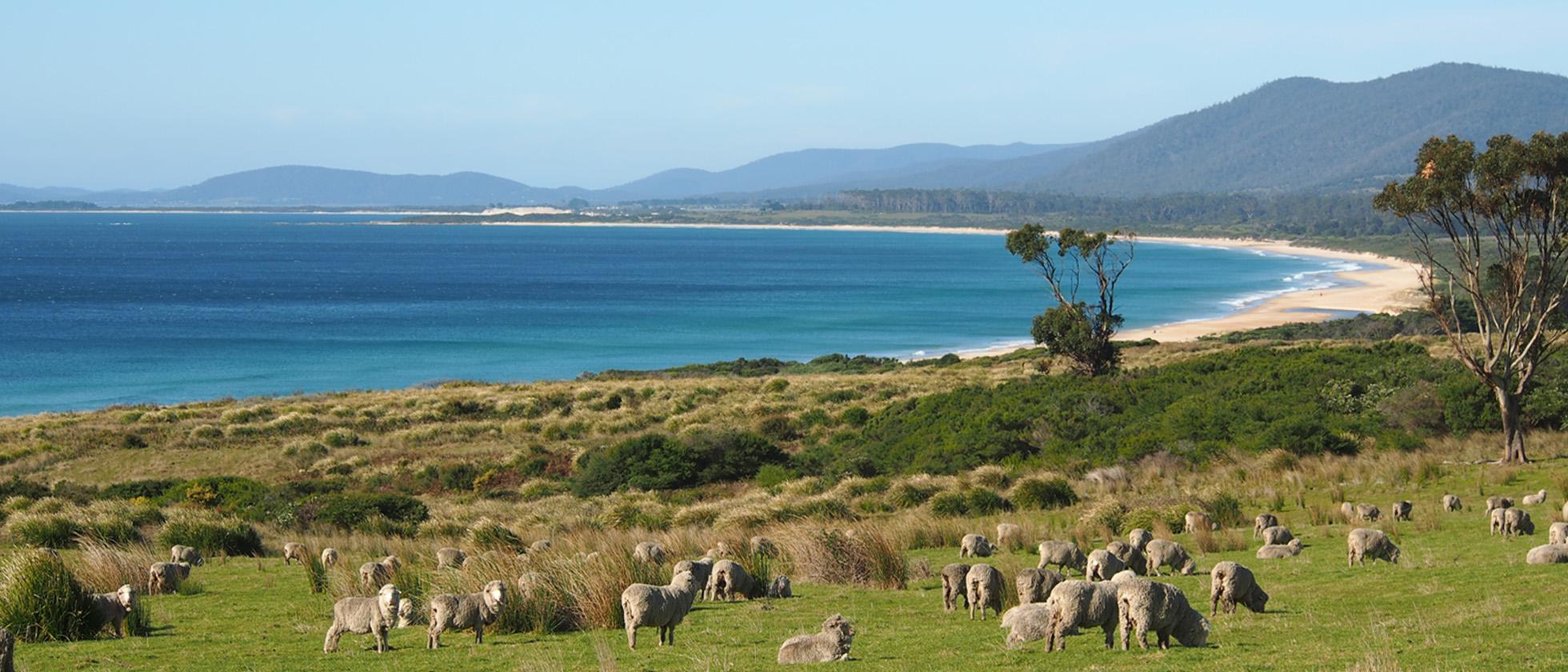 Verliefd Op Tasmanië