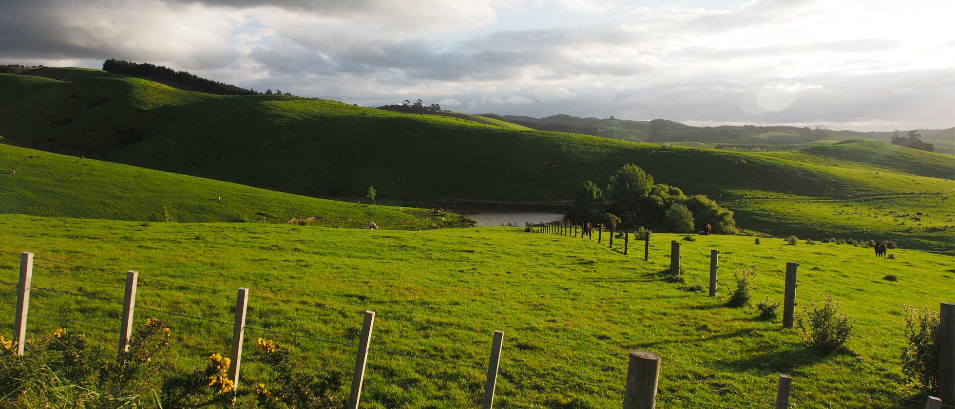 Nieuws Uit Nieuw-Zeeland Part II: Reizen Met Rickert
