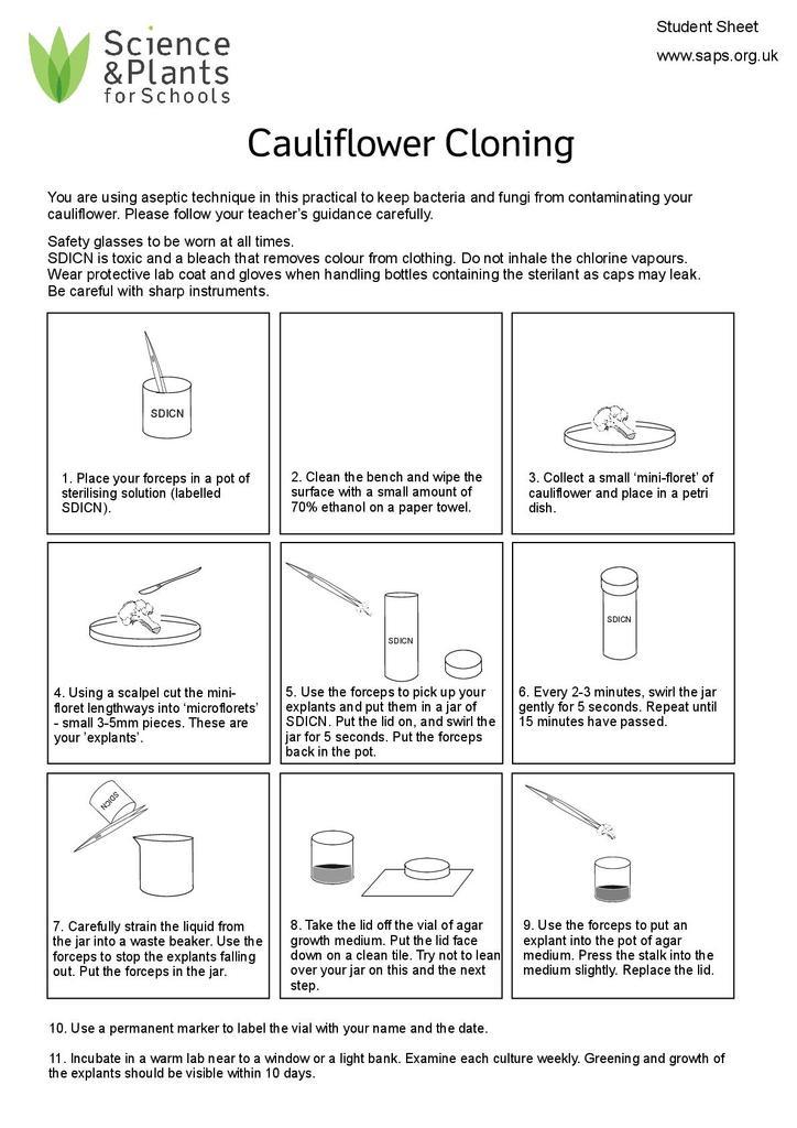 Cauliflower Cloning Easy Method