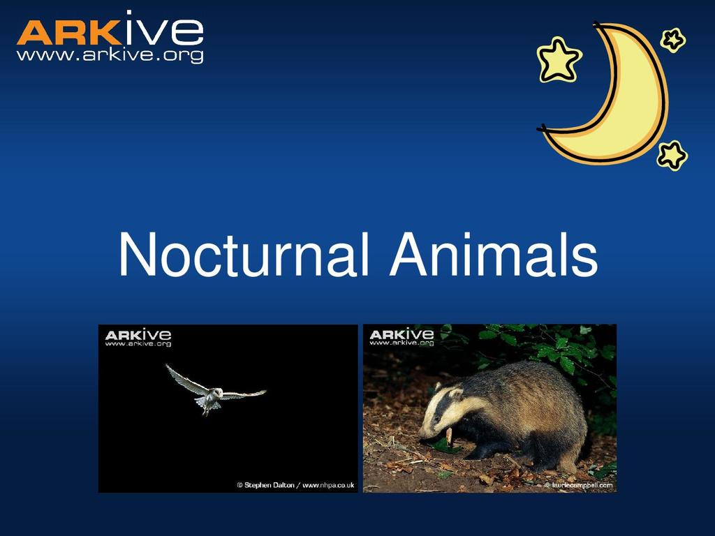 Nocturnal Animals Age 5 7