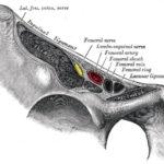 fascia iliaca