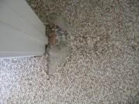 Can You A Patch Of Carpet - Carpet Vidalondon