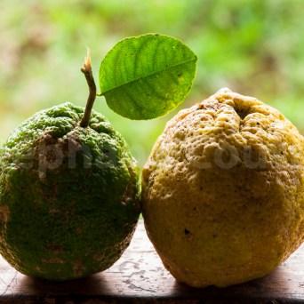 Citron - Guyane
