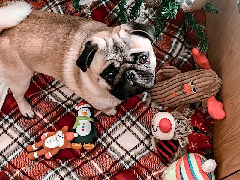 Christmas Gifts For Dogs Under £12
