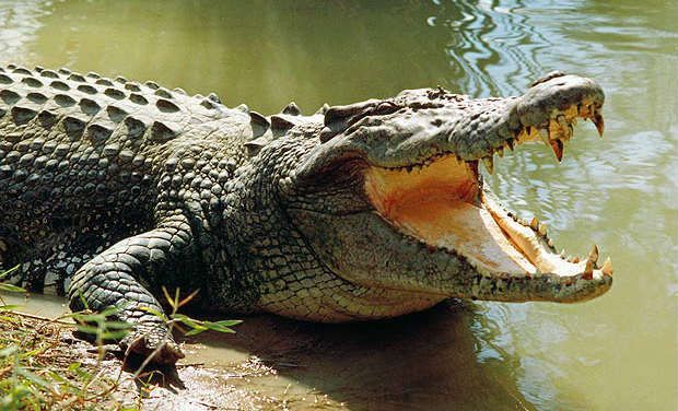 Crocodiles were associated with Sobek, a god responsible for pharaonic power, fertility, and military prowess, but served additionally as a protective deity with apotropaic qualities, invoked particularly for protection against the dangers presented by the Nile river.