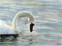 Sunlit Swan Fine Art Giclee Print by Stephen Murray
