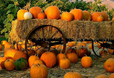 pumpkinpatch