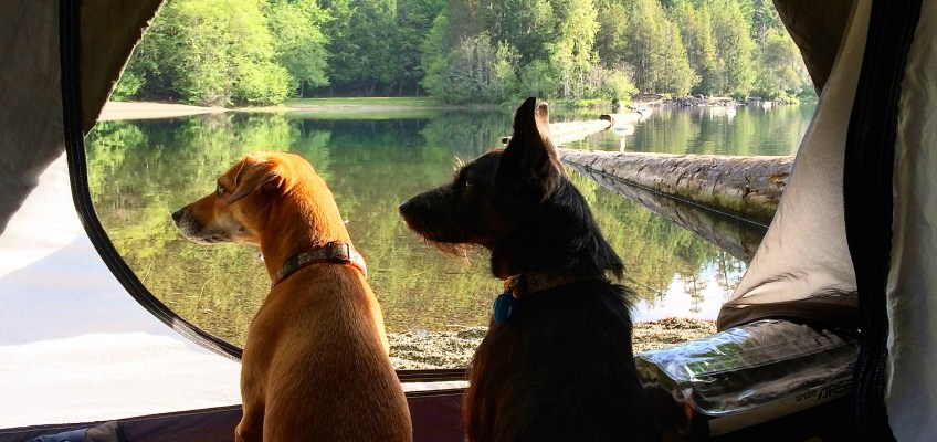 How to do cycle touring with your dog and why the heck would you do that?