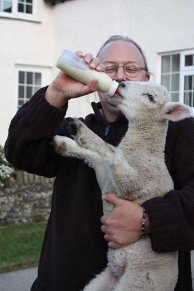 Feeding-the-lambs